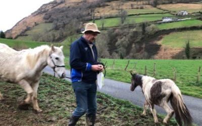 Halte aux mutilations de chevaux